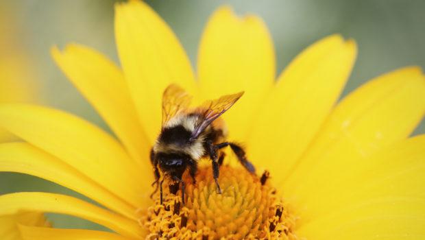 Les vertus du pollen