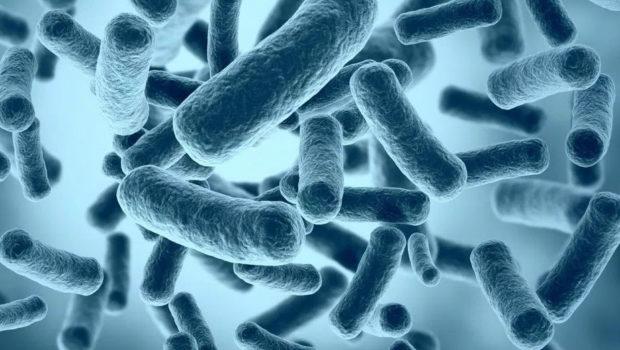 COMPRENDRE L'IMPORTANCE DE LA FLORE INTESTINALE  « MICROBIOTE»