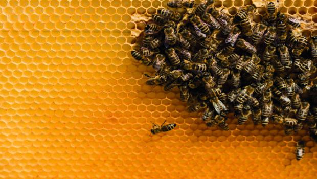 Les bienfaits des produits de la ruche : choisissez français et Bio !