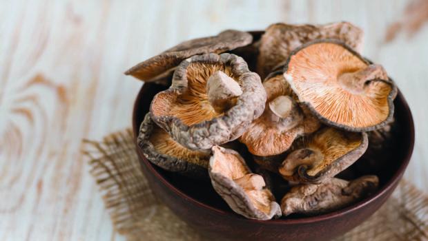 La mycothérapie ET l'usage médicinal des champignons