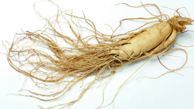Ginseng, la racine de longue vie